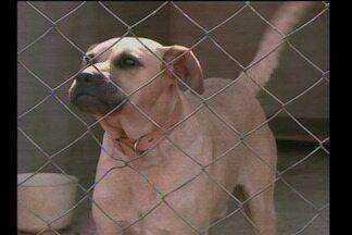 Aumento de cães nas ruas levanta alerta de saúde para as pessoas - O aumento do número de mordidas que pode provocar doenças.