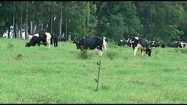 Criação de gado em confinamento agrada produtor no Alto Paranaíba - Aumento na produção de leite é sinal de que rebanho está em boas condições.