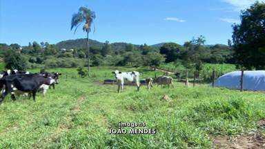 Insegurança preocupa produtores no Centro-Oeste e Triângulo Mineiro - Fazendas são invadidas e gado é roubado em Carmo do Cajuru. Câmeras são instaladas em pontos estratégicos da zona rural de Uberaba.