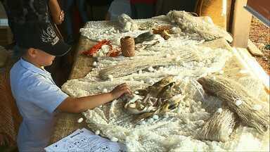Fazendinha da ExpoLondrina mostra como é a produção da seda - Processo de produção tem atraído muitos visitantes.