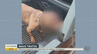 Pit bull é resgatado após ser agredido com golpes de facão em Batatais, SP - Polícia Militar Ambiental multou suposto agressor em R$ 30 mil.