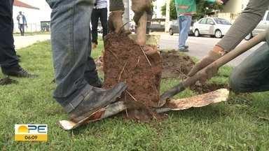Recife vai ganhar novas duas mil mudas de árvores - Projeto prevê plantio nos próximos meses