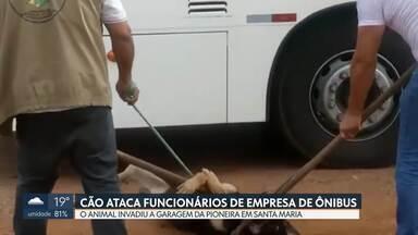 Cachorro invade garagem de ônibus em Santa Maria e ataca funcionários - O animal foi capturado pela Zoonoses que vai investigar se ele estava com raiva ou alguma outra doença.