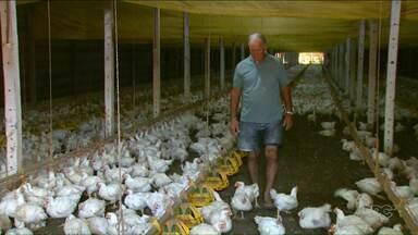 Avicultores estão preocupados com embargo à exportação de frango - União Europeia anuncia a proibição de compra de carne brasileira, principalmente frango.