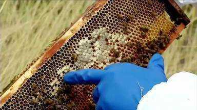 RJ Rural mostra processo da produção de mel - Veja como funciona um apiário, a roupa utilizada para manusear a colmeia, a rotina do apicultor e como esse produto é engarrafado para comercializar.