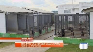 Dois presídios sa região vão receber cães e gatos - Ideia é que visitantes dos presídios adotem os animais.