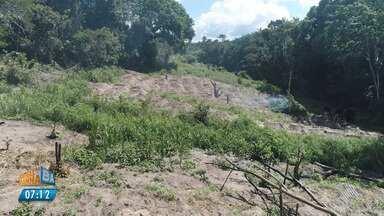 Uma tonelada e meia: polícia destrói plantação de maconha em Esplanada - Um drone foi usado para encontrar o local.