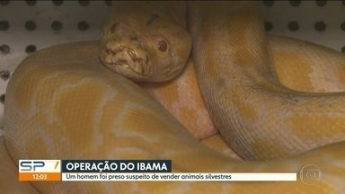 Um homem é preso suspeito de vender animais silvestres - O Ibama fez uma operação nesta terça-feira (5).