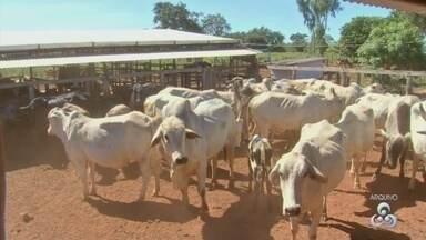 RR ganha autorização para exportação de carne bovina para outros estados do país - Certificado internacional de estado livre da aftosa deve ajudar RR a exportar carne, gado e derivados.