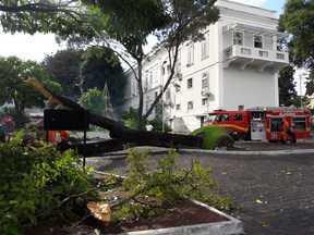Árvore cai dentro do Palácio República dos Palmares, no centro de Maceió - Bombeiros estão no local para fazer o corte da árvore. Cajazeira era centenária e, segundo o CB, caiu após o solo ficar encharcado com a chuva.