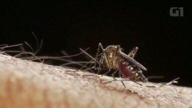 Cachoeiro de Itapemirim já registrou 30 notificações para casos de chikungunya - Cinco casos já foram confirmados.