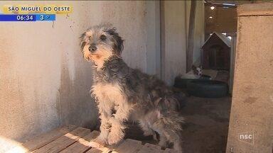 Canil opera em condições precárias na Serra de SC; cães morreram por contaminação - Canil opera em condições precárias na Serra de SC; cães morreram por contaminação