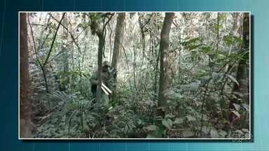 Dois homens são presos suspeitos de retirar palmito dentro do Parque Nacional do Iguaçu - Um homem conseguiu fugir.