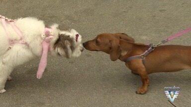 Cãominhada terá várias novidades neste ano - Uma das novidades é o primeiro encontro de especialidades veterinárias.