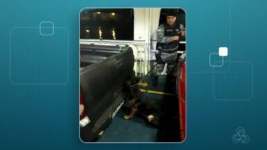 Dez quilos de maconha são achados em fundo falso de picape no Porto de Santana - Veículo com a placa da cidade de Manaus tinha desembarcado no Porto do Grego, em Santana.