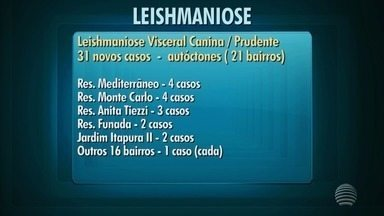 Presidente Prudente registra mais 31 casos de leishmaniose em cães - Cidade possui 117 registros da doença em 2018.