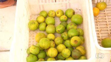 Alimentos que iriam para o lixo são reaproveitados e ajudam moradores do Tocantins - Alimentos que iriam para o lixo são reaproveitados e ajudam moradores do Tocantins