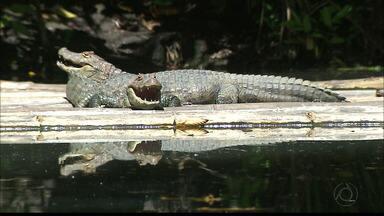 JPB2JP: A Fauna e a flora da Bica encantam a criançada e também os adultos - Parque na área central de João Pessoa.