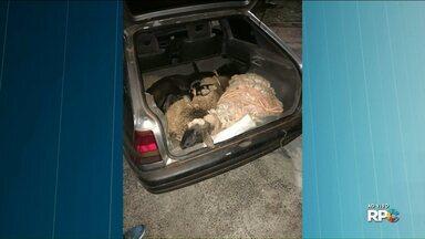 Homem abandona carro com carneiros amarrados no porta-malas em Umuarama - Até o momento, o homem não foi preso.