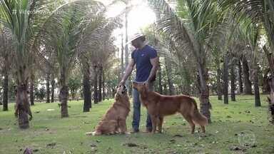 Mariano, da dupla com Munhoz, apresenta seu cantinho no Mato Grosso do Sul - Cantor mostra seus animais e garante que é mesmo um cara da roça!
