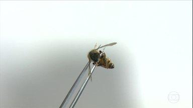 Apicultores de São Paulo enfrentam a morte de milhões de abelhas - Em algumas propriedades a mortandade é registrada desde o início do ano. O assunto chamou a atenção de pesquisadores de duas universidades. Em muitos casos, as mortes foram causadas por agrotóxicos.
