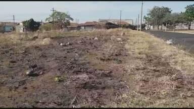 Moradores colocam fogo em mato alto no Jardim do Éden em Franca, SP - Cansados de esperar pela limpeza da prefeitura, vizinhos incendiaram o terreno.