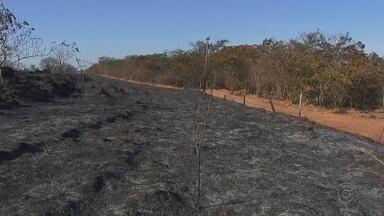 Área do antigo IPA continua pegando fogo em Rio Preto - Desde quarta-feira (25) a área do antigo IPA em Rio Preto (SP) vem pegando fogo, com um segundo ponto em chamas. No fim do dia a polícia ambiental mediu a área e contabilizou os prejuízos.
