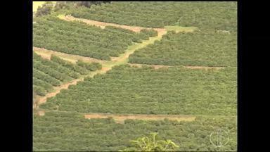 Resultado do Censo agropecuário aponta que o uso de agrotóxico está crescendo em Minas - Dados foram divulgados nesta sexta.