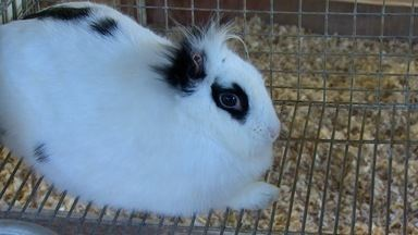 Um pet para chamar de meu: coelhos, bicho econômico e tranquilo - O animal pode ser uma boa opção para você. Confira no quadro desta semana.