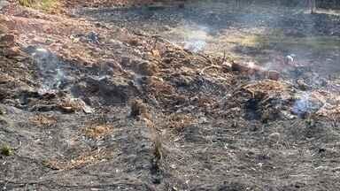 Números de incêndios aumentam na região de Presidente Prudente - Até julho, mais de 1,3 mil casos foram registrados nas cidades.