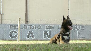 Conheça o trabalho no canil do pelotão de choque da Polícia Militar - PM's e cães criam vínculos afetivos