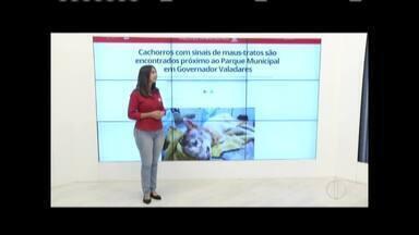 Zana fala sobre os destaques do G1 desta quinta-feira (9) - Veja que cachorros com sinais de maus-tratos são encontrados próximo ao Parque Municipal em Governador Valadares.
