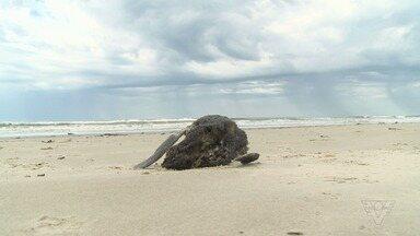 Mais de 200 pinguins são encontrados mortos em praia de Ilha Comprida - Animais foram encontrados em apenas uma semana. No mesmo período do ano passado, apenas três animais foram achados, um crescimento de 6.600%.