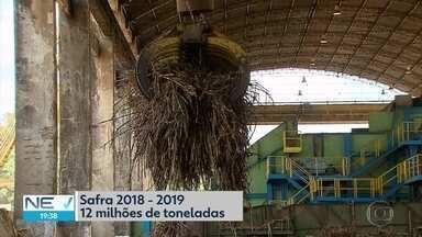 Início do período de safra da cana-de-açúcar aumenta postos de trabalho em PE - Expectativa é de que surjam 70 mil vagas no período, número superior ao da safra passada.