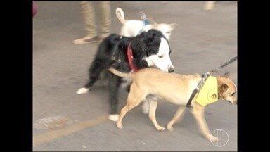Primeiro encontro de vira-latas é realizado em Montes Claros - Evento reuniu cães adotados nesse domingo.
