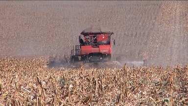 IBGE reúne agricultores, técnicos e empresas de agronegócio em Balsas - IBGE avalia a safra de grãos da região e conclui que houve perdas na produção de milho por falta de chuvas. Os agricultores aguardam o início das chuvas para o mês de outubro.
