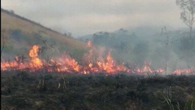 Incêndio atinge Brejinho de César de Sousa em Mogi - Local abriga pássaros ameaçados de extinção.
