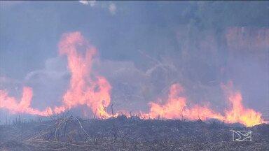 Maranhão registra cerca de 4.700 focos de incêndio, segundo Inpe - Segundo o Instituto, de janeiro até o momento o estado já registrou 4.698 focos, o que dá ao estado a segunda posição no ranking dos estados com o maior número de queimadas.