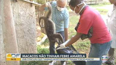 Macacos mortos no DF e Entorno não tinham febre amarela - Pesquisadores da UnB concluíram que 7 dos animais morreram por toxoplasmose. Em 2018, 288 macacos foram encontrados mortos no Distrito Federal e no Entorno. No DF, foram 151 animais.