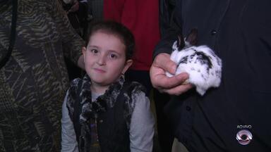 Pavilhão de pequenos animais é um dos destaques da Expointer 2018 - Assista ao vídeo.