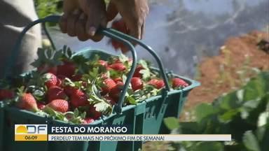 Festa do Morango está cheia de guloseimas - Repórter Fred Ferreira mostra toda a variedade do que se pode fazer com o morango. Quem não aproveitou nesse fim de semana pode visitar a feira no fim de semana que vem (07 a 09/09).