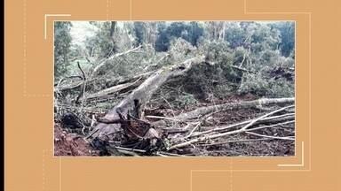 Patram localiza duas áreas de desmatamento aqui em Erechim - Árvores centenárias foram derrubadas.