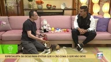 Alexandre Rossi dá dicas para evitar que o cão coma o que não deve - Especialista em comportamento animal explica tudo no' É de Casa'