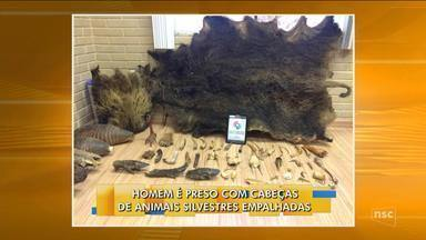 Com cabeças de animais silvestres empalhadas, homem é preso suspeito de crime ambiental - Com cabeças de animais silvestres empalhadas, homem é preso suspeito de crime ambiental em SC
