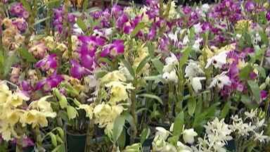 Mogi tem Festival de Orquídeas - Evento é em orquidário no bairro do Taboão.