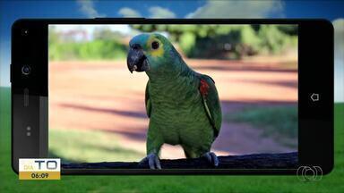 Telespectadores enviam fotos de pássaros e flores para o QVT do Campo - Telespectadores enviam fotos de pássaros e flores para o QVT do Campo