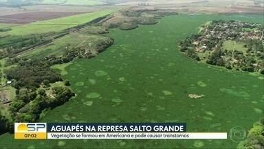 Vegetação cobre represa e causa preocupação em Americana - Aguapés se espalharam pelas águas da Represa Salto Grande. Apesar do visual bonito, a planta pode causar transtornos.