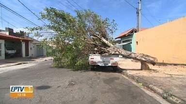 Chuva forte derruba 25 árvores e 45 postes, em Indaiatuba - Temporal causou danos à rede elétrica da cidade. Reparos estão sendo realizados desde domingo (16).