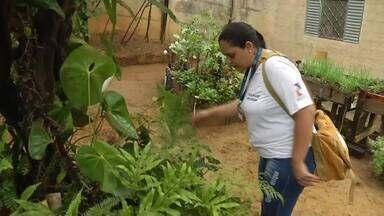Índice de infestação do aedes aegypti cai em Fabriciano, mas prevenção deve continuar - Mosquito é transmissor de várias doenças.