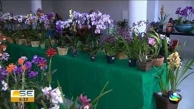 Mostra de flores ocorre em Aracaju - Estação das flores começa neste sábado (22), às 22h54.